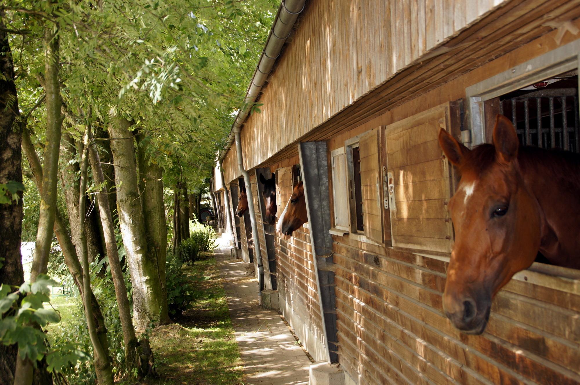 Großer Stall mit 50 Pferden